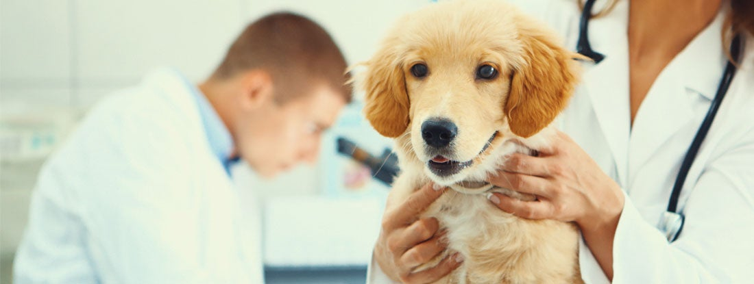 How to Find the Best Veterinarian Insurance | Trusted Choice