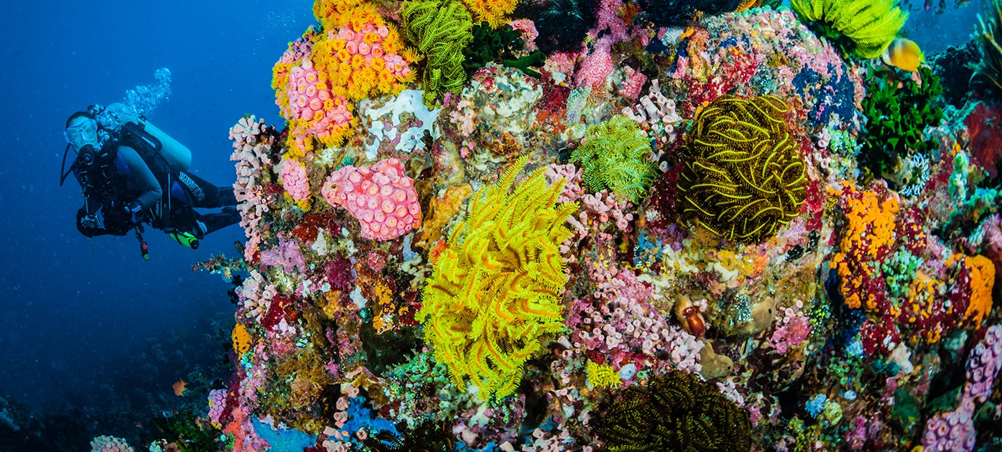 Why We Prize Corals | XPRIZE