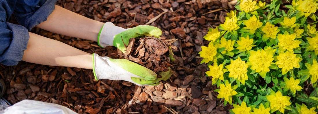 South Carolina Landscapers Insurance