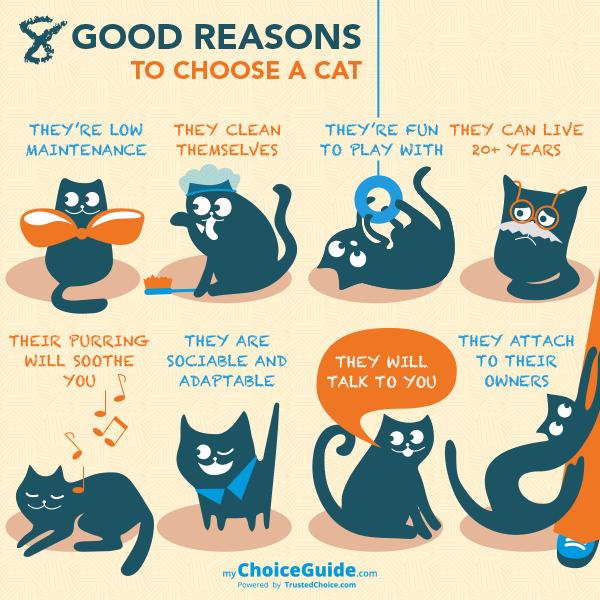 choose a cat
