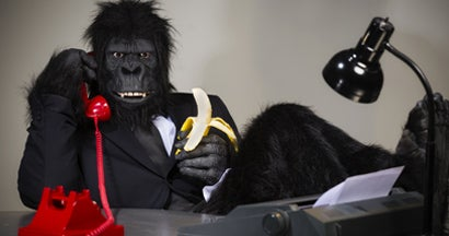 A man in a gorilla suit talking on the telephone in his office.
