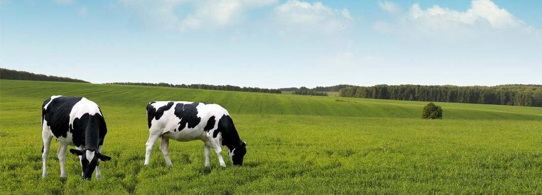 Crops vs livestock