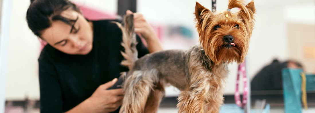 Pet Groomer Insurance