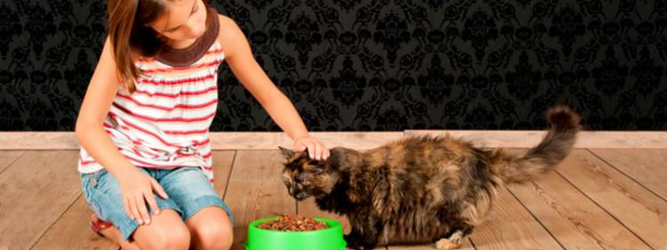 The shocking truth about cat food