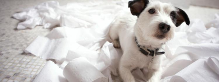 5 Simple Steps for Landlords to Safely Rent to Dog Owners