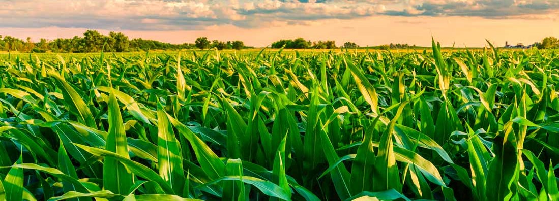 Champaign Illinois Farm Insurance