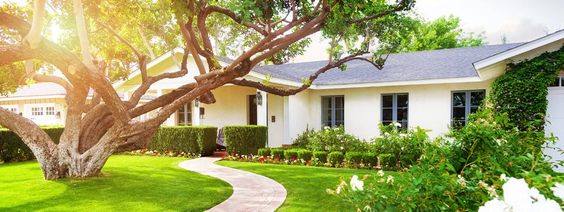 Beautiful home with big green grass yard and large tree