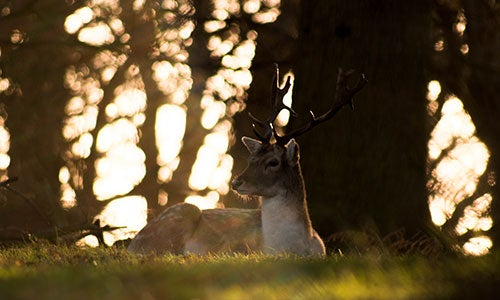 deer in th forest