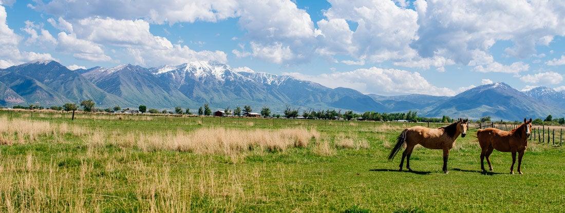 Horses in the ranch in Utah