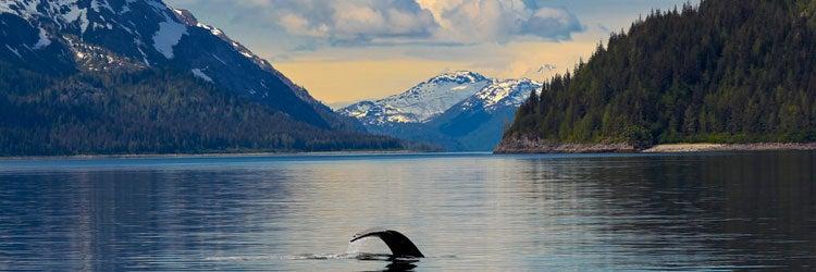 Alaska Work comp