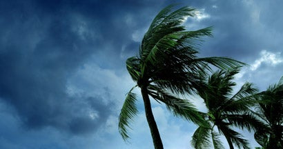 Waving palm trees in windy tropical storm over cloudy dark sky