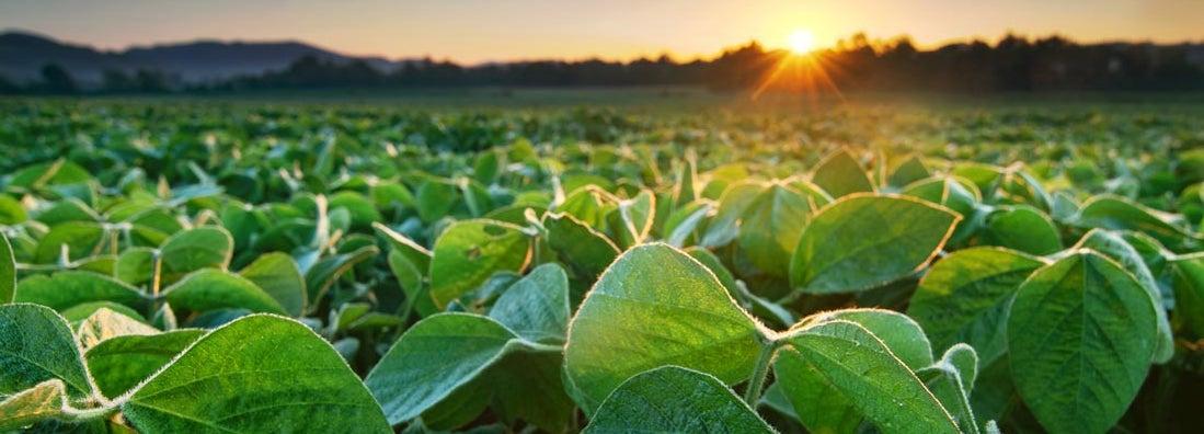 Mississippi Soybean Farm Insurance