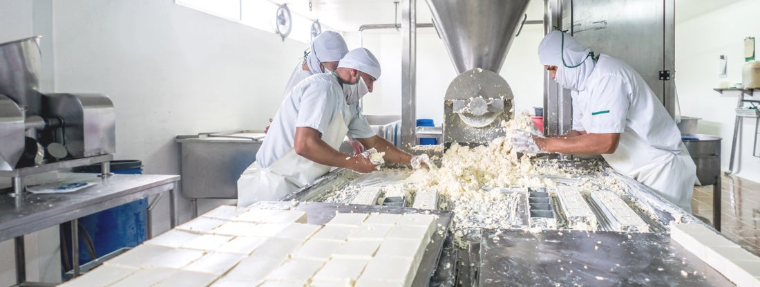 Workers at a dairy factory making cheese