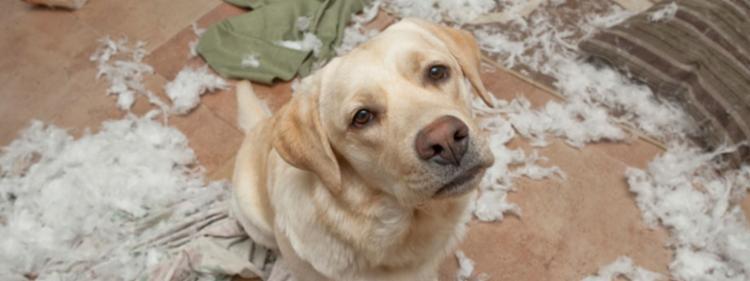 Dog caught making a mess