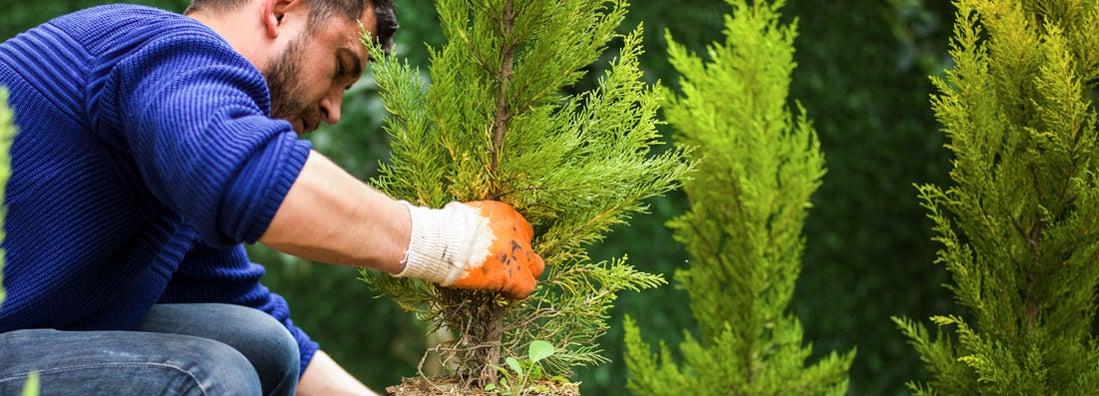 Mississippi Landscapers Insurance