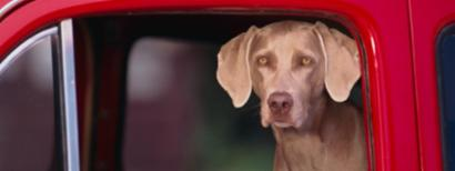 7 Surprising Dangers of Driving with Pets
