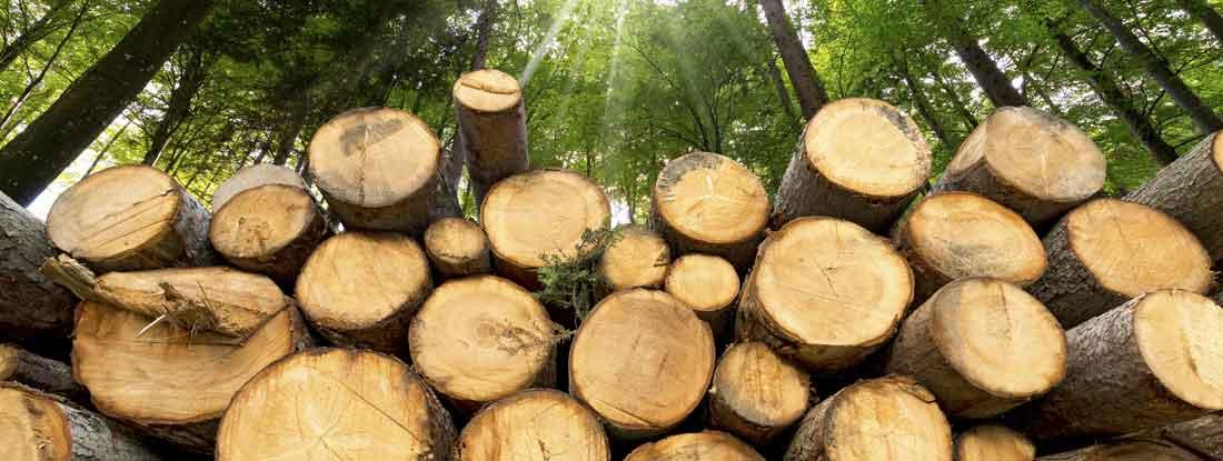 Lumber yard insurance
