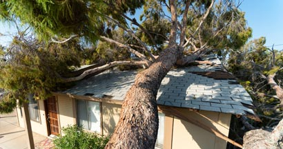Tree falls on neighbors roof of home after huge storm.  All the home insurance secrets your agent left out.