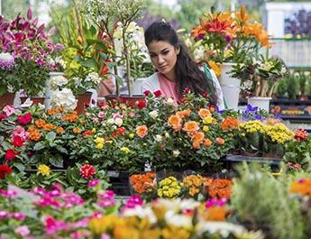 Woman selecting flowers at a flower market