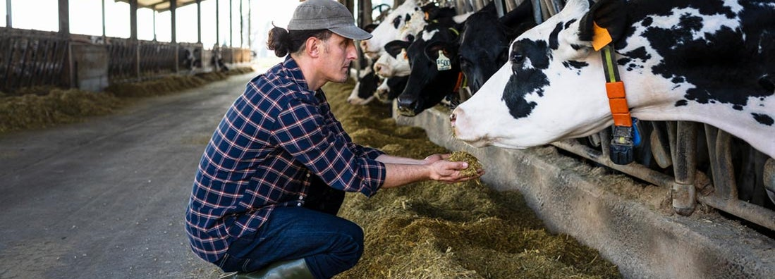Deerfield Illinois Farm Insurance