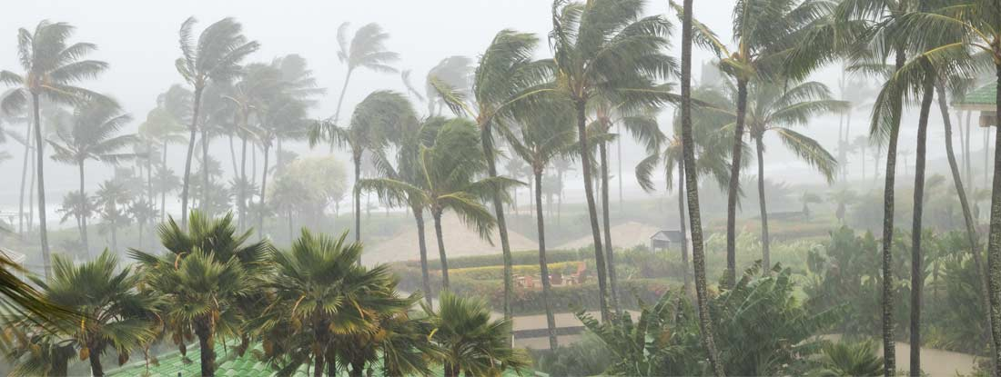 Palm trees blowing in the wind and rain as a hurricane approaches coastline
