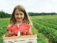 Little girl at a berry farm