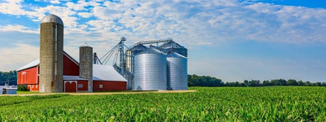 Midwest farm with spring corn crop and red barn