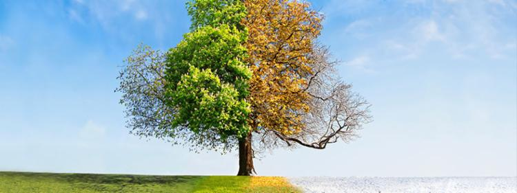 A tree throughout all four seasons.