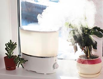 Perfect humidifier in a window.