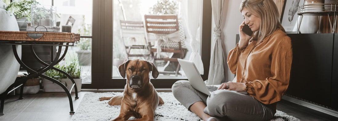 Pet Sitting Service Insurance