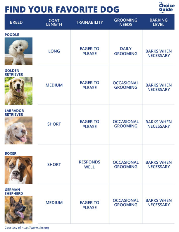 best large dog breed infographic