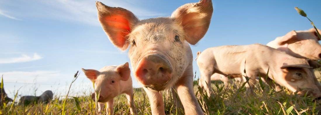 How to insure livestock on a hobby farm