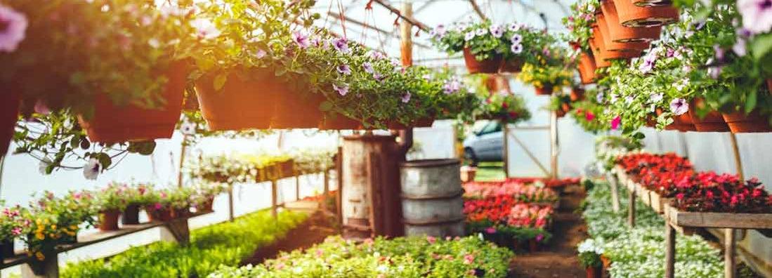 Plant Nursery Insurance