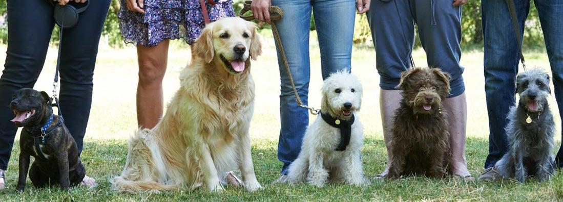 Pet Trainer Insurance