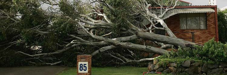Does home insurance cover tree damage