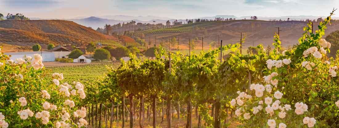 Winery Insurance