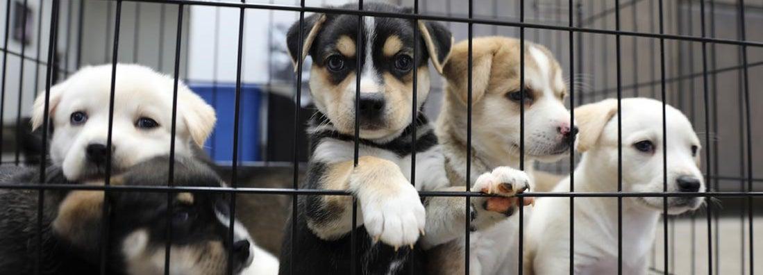 Animal Shelter Insurance