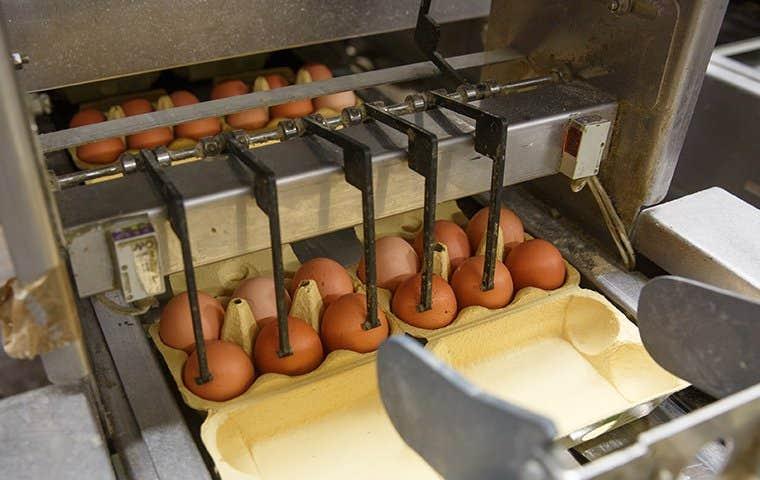 eggs in an egg carten