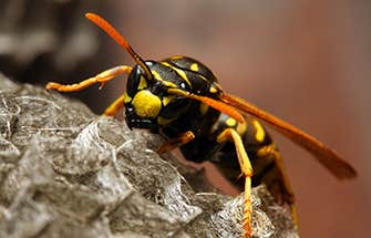 a wasp up close on a nest