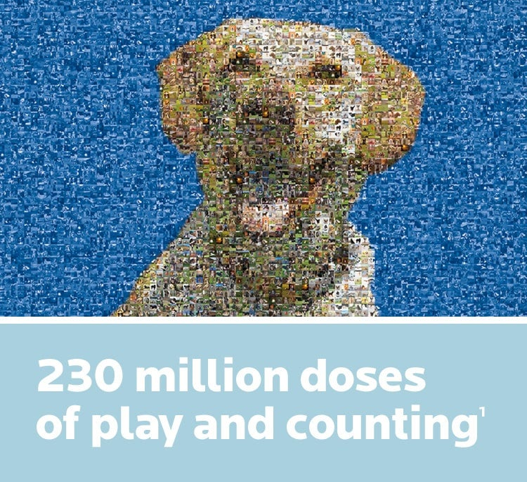 Yellow lab mosaic portrait composed of many other dog portraits
