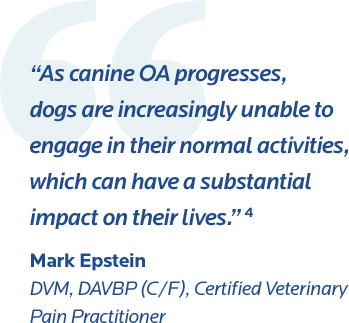 : Quote from vet on negative impacts of canine OA.