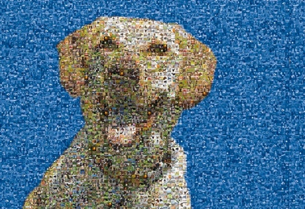 Mosaic photo of many dogs compiled to make one photo of a yellow lab