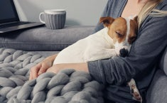 A woman sitting on a couch with a cozy blanket on her lap and her dog (possibly a Jack Russel) asleep against her chest.