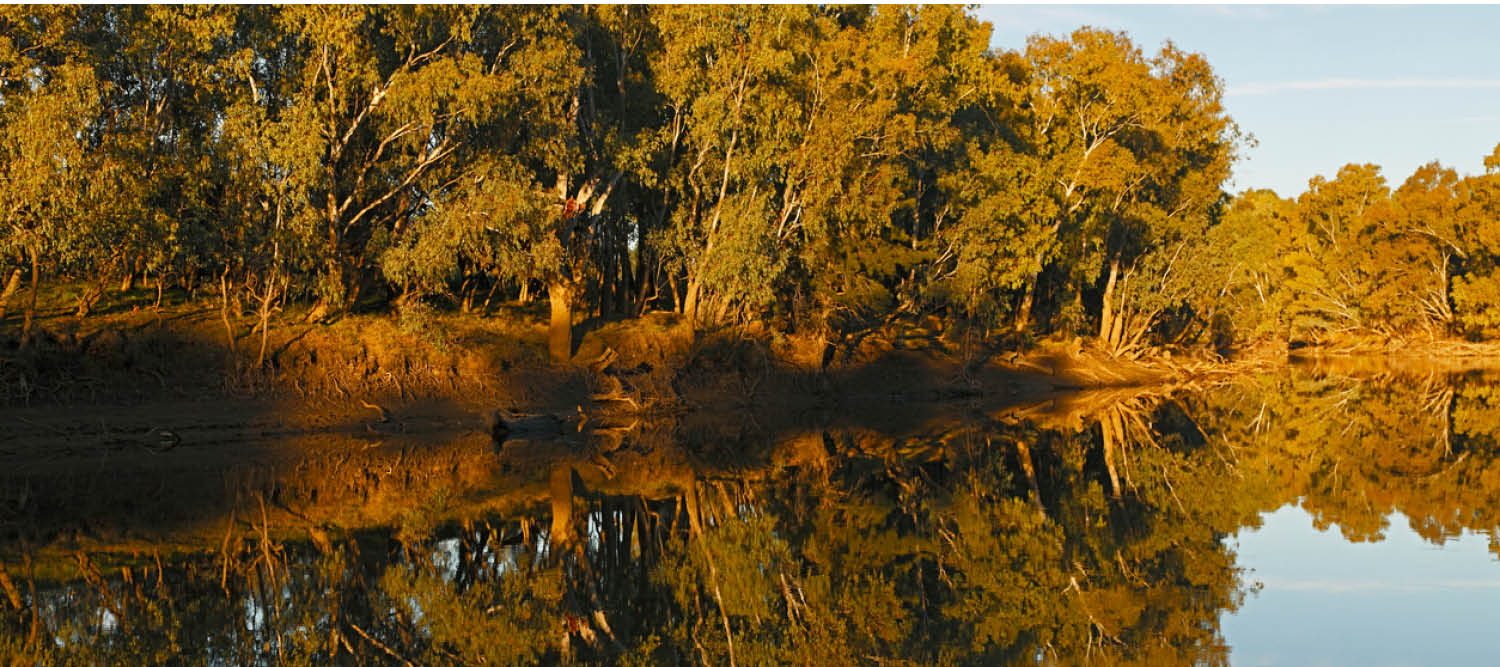 Trees reflecting onto water as sun goes down