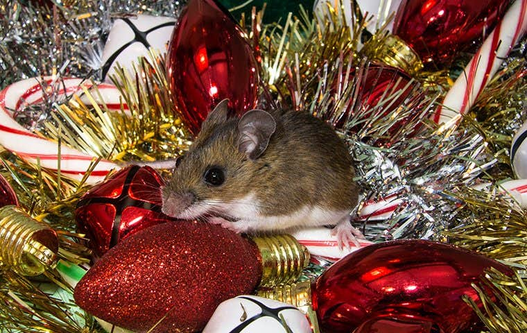 a mouse on christmas decorations