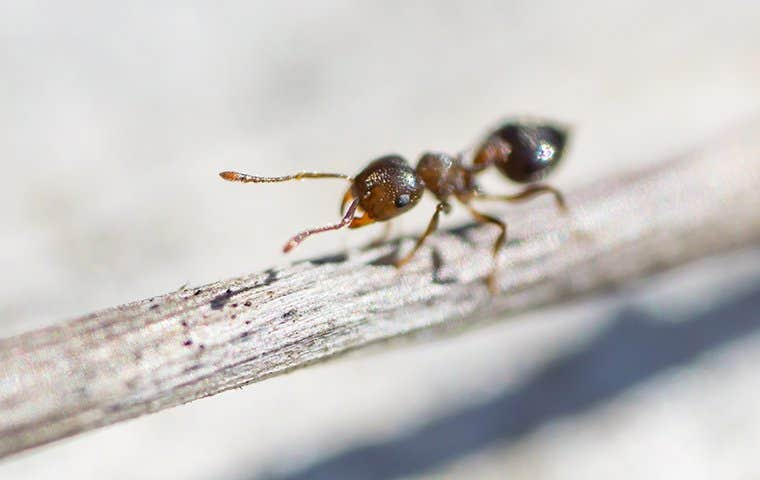 an ant on a little stem