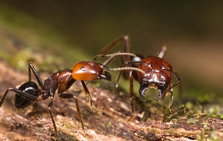 ants on a mossy log