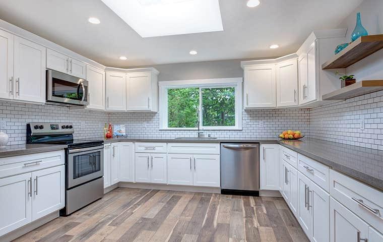a nice pest free kitchen