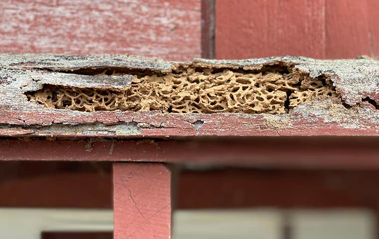 termite damage to a building