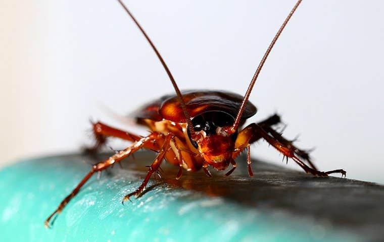 a cockroach in a bathroom in denver colorado